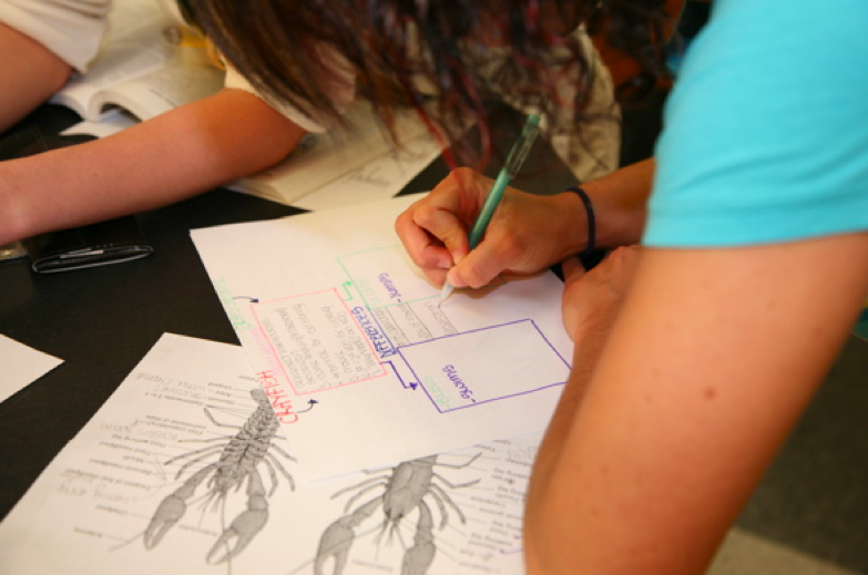 Students charting Arthropod similarities & differences.