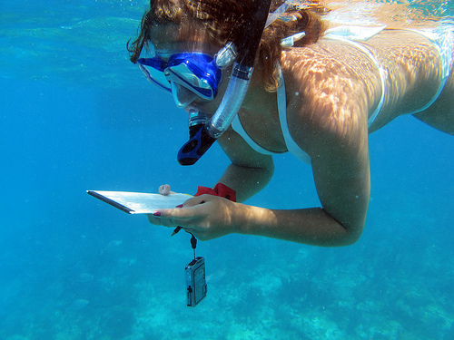 Lauren collects reef fish species data