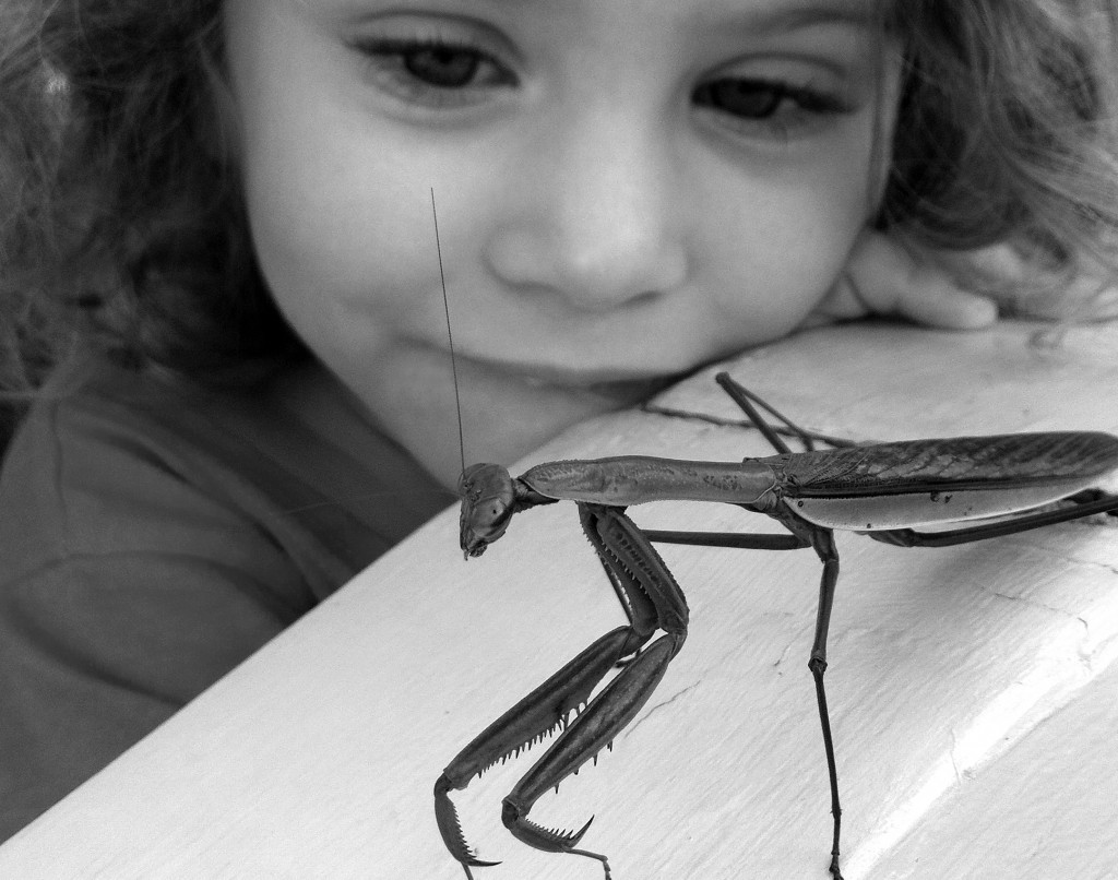 delaney and the mantis