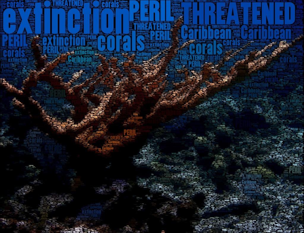 THREATENED: Caribbean Corals