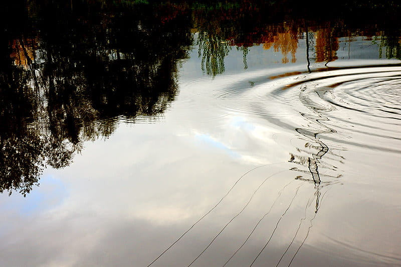 noises - image of ripples in a pond